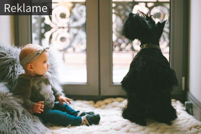 Baby og hund sidder sammen i vindue